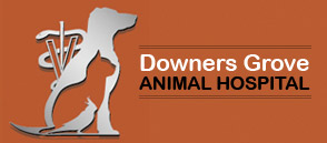 Downers Grove Animal Hospital & Bird Clinic