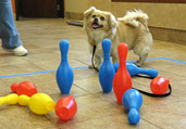 Dog Training & Obedience Classes
