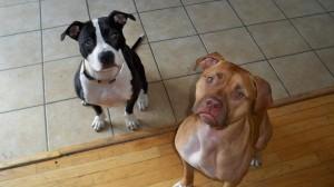 Athena and Donny Nunez (2)