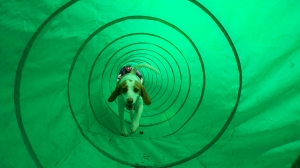 Belle in the tunnel