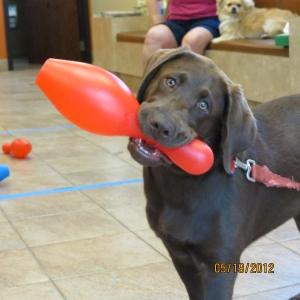 Canine Games and Continuing Education Class