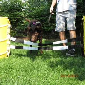 Keeley jumping over the agility jump