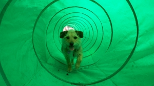 Kona in the tunnel